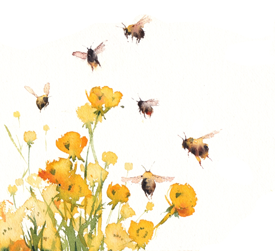 Kate-Osborne.Bee.w.Buttercups copy